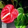 کانال مرکز خرید فروش گل گیاه