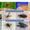 کانال کنترل حشرات و آفات شهری در تهران