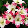 کانال گلهای شما…