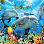 کانال Mr.Dolphin