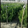 کانال تلگرام بازارنهال مرکبات ایران