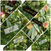 کانال فروش باغ ثمری