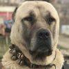کانال روبیکا سگ ها | persiandog